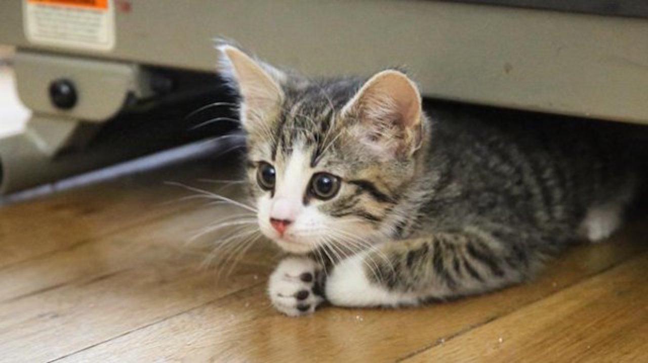 ウィキリークス創始者ジュリアン・アサンジ、猫を飼う