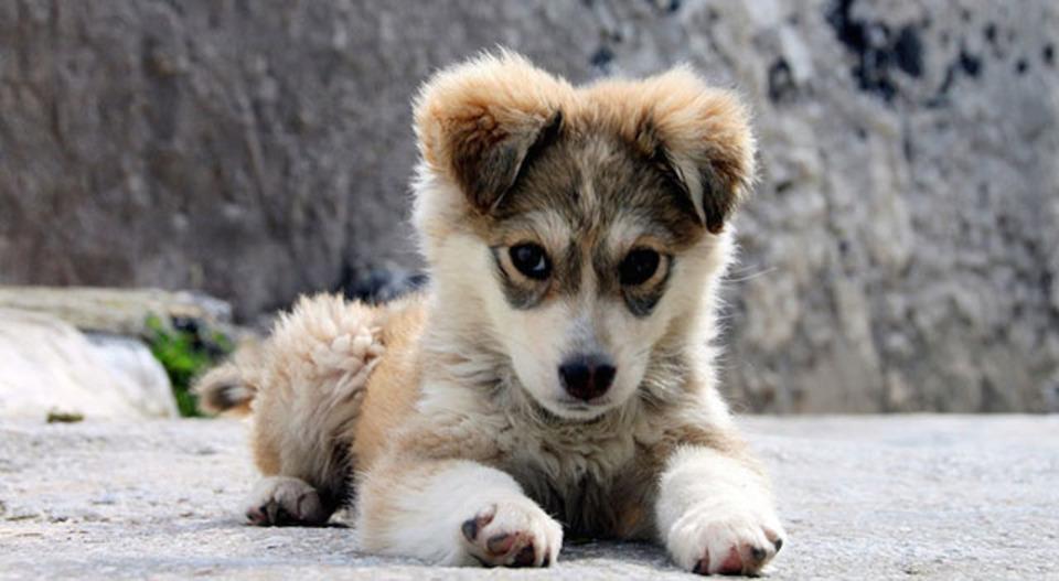 キシリトールは犬にとって毒だった