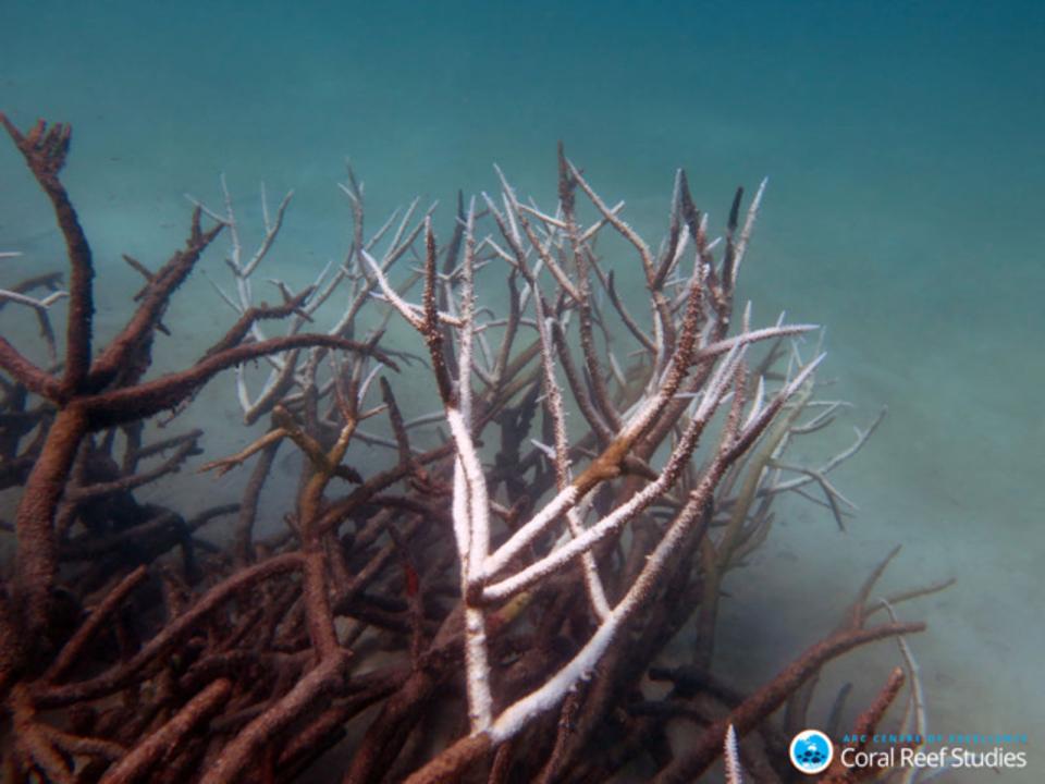 白化するグレートバリアリーフ、やはりどんどん死滅している