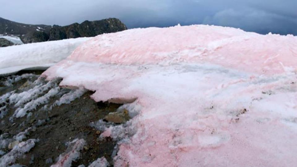 ピンクの雪に科学者たちが焦るのはなぜ?