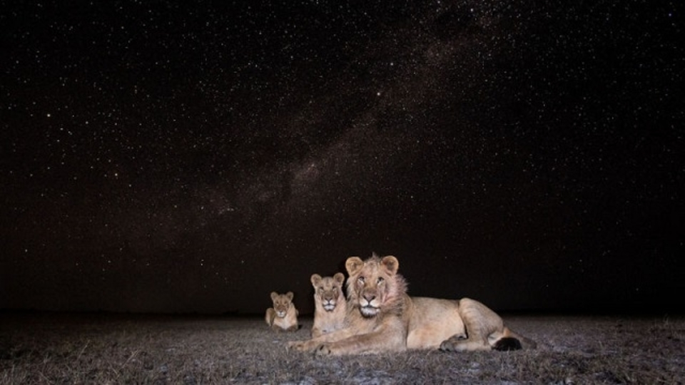 自らカメラトラップまで開発したカメラマンが撮った、アフリカの野生動物の美しい姿13選
