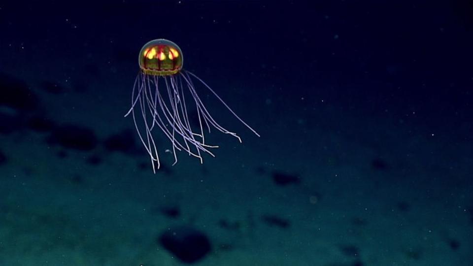 世界で最も深いマリアナ海溝、汚染されてゴミだらけに
