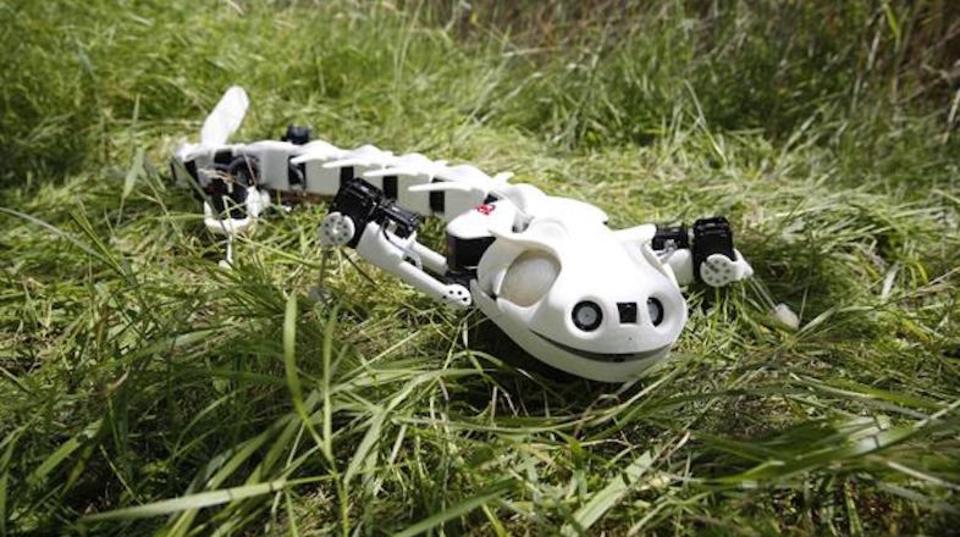 キモかわいいロボットサラマンダーが草原から現れた!