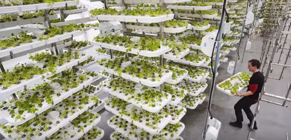 アメリカで世界最大の「垂直農場」建設中