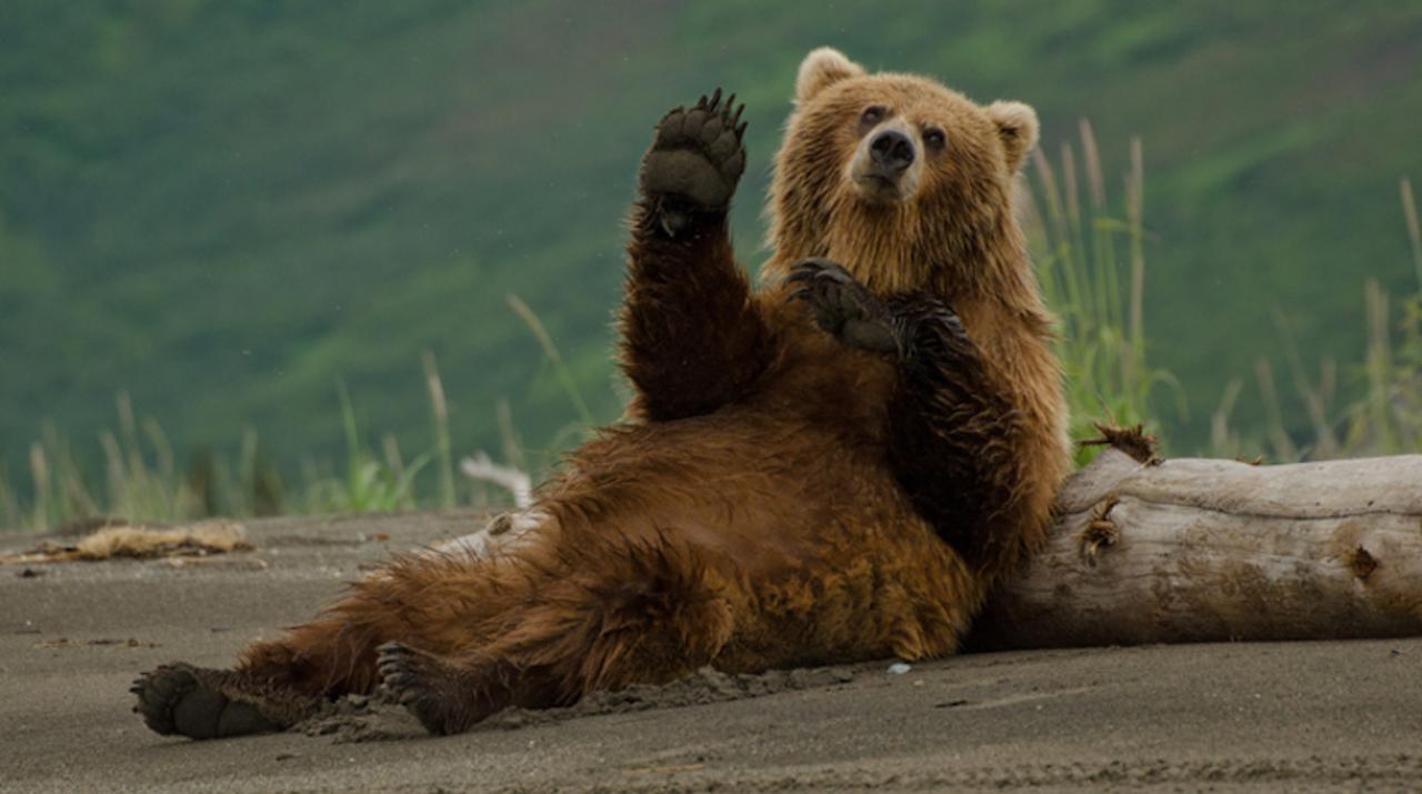 ゴミを食べているクマは怠惰になる