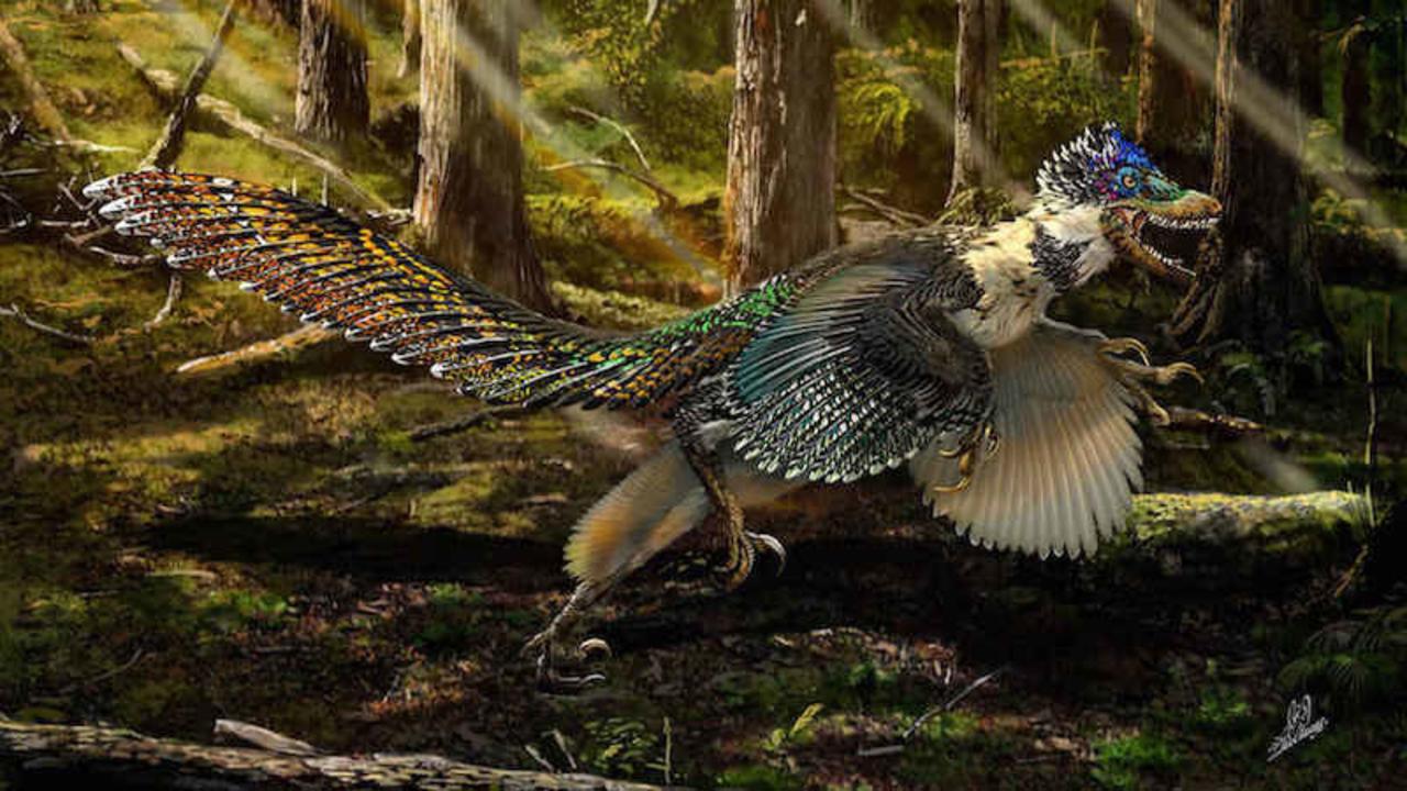 恐竜は大声で吠えずに、クークー鳴いていた可能性が明らかに