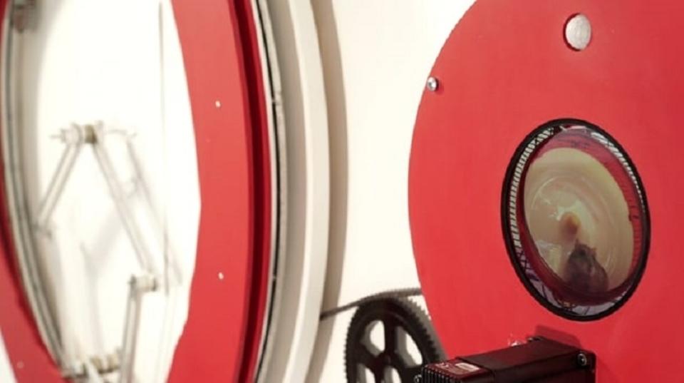 Raspberry Piとハムスターのコラボ。回し車を回す力で動く「ハムスター専用、自画像マシン」