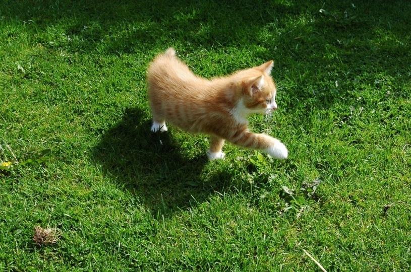 NVIDIAのエンジニアは猫を追い払うのにもディープラーニングを使うらしい