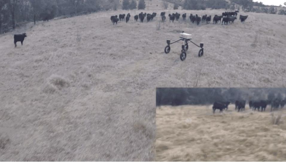 家畜を追い立て、移動させる。ロボットカウボーイの登場