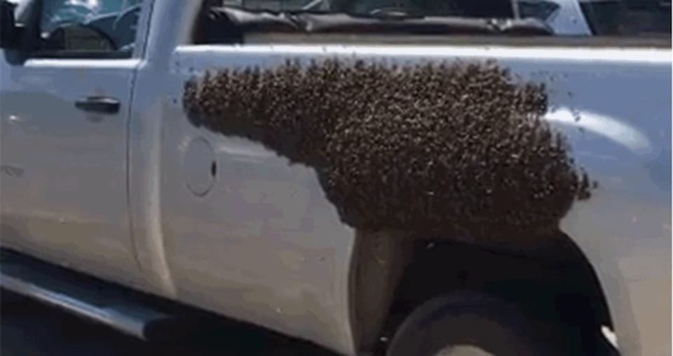 いかに蜂が女王に忠実かよーくわかる地獄絵図