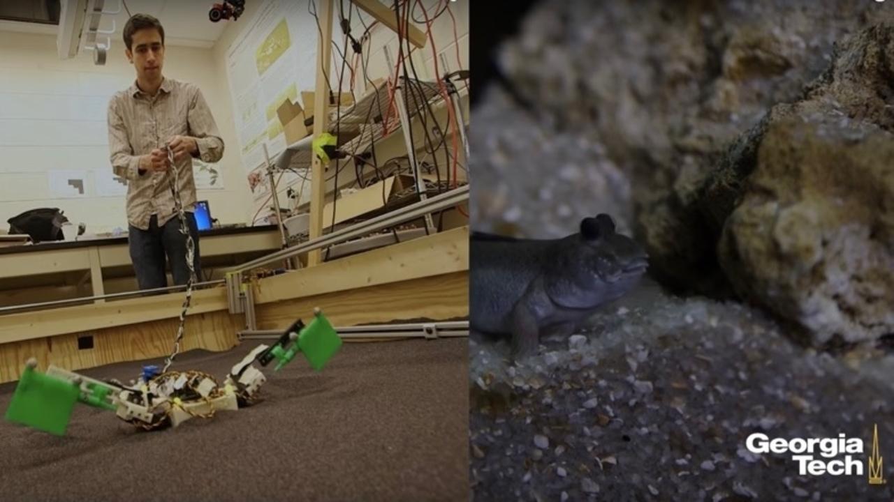 3億6000万年前、生物はどうやって陸へと上がったのか...両生類ロボットで進化を研究