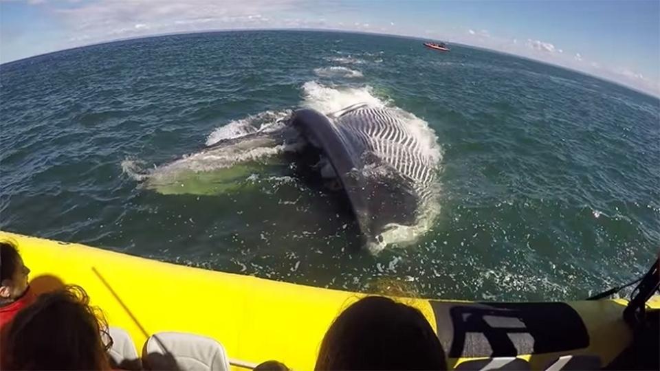 ド迫力! ホエールウォッチング中にクジラがボートに向かってきた