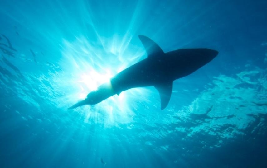 もたらすのは恐怖にあらず。「ジョーズ」でおなじみのサメが復活の兆し