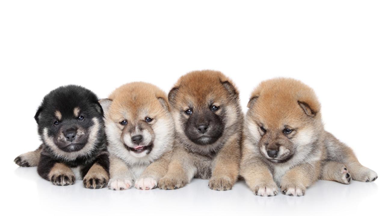犬の精子が26年間で激減、原因は市販のドッグフード?