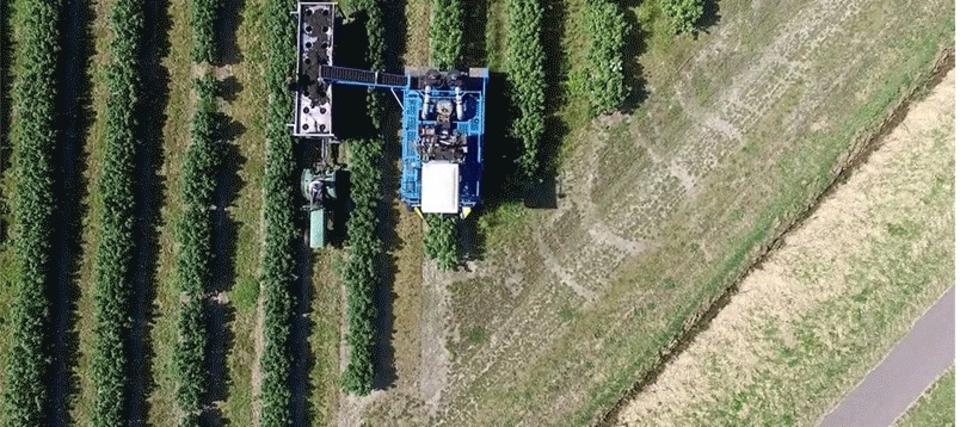 まるで工場見学。大型マシンで小さな実を収穫していく動画がたのしい