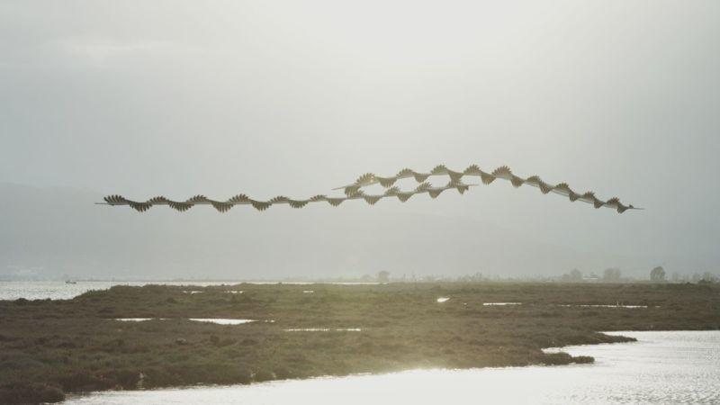 昔の技術で斬新に表現。空飛ぶ鳥の軌跡を写した写真11
