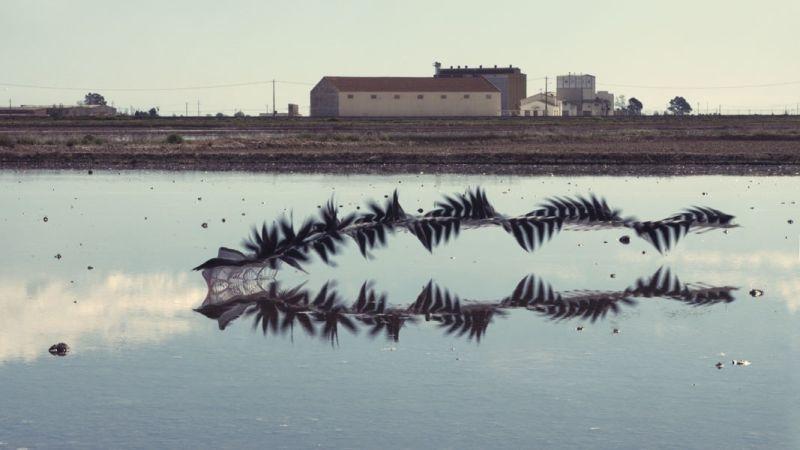 昔の技術で斬新に表現。空飛ぶ鳥の軌跡を写した写真12