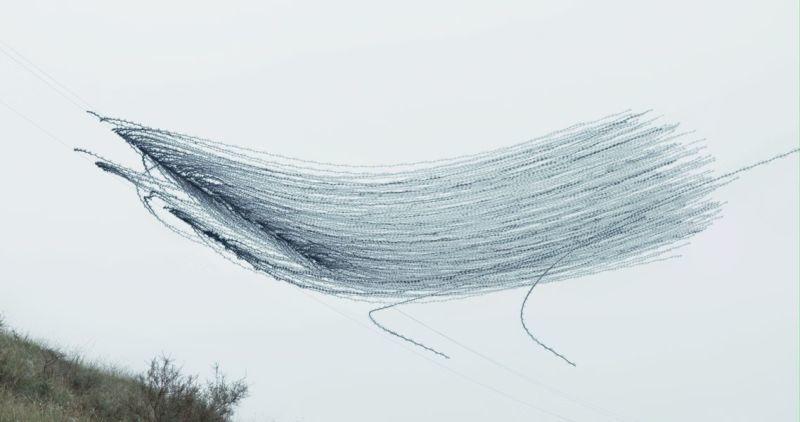 昔の技術で斬新に表現。空飛ぶ鳥の軌跡を写した写真5
