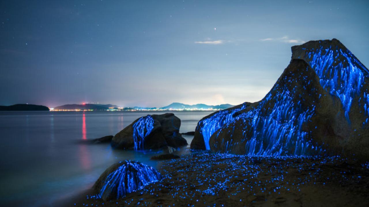 この景色はいったい...! 夜の海辺で幻想的に青く輝くのは...