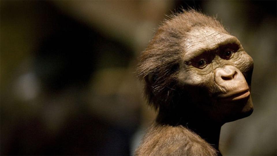 猿人のルーシーの死因は木からの落下か。皮肉にも、木の上で生活していた証拠に