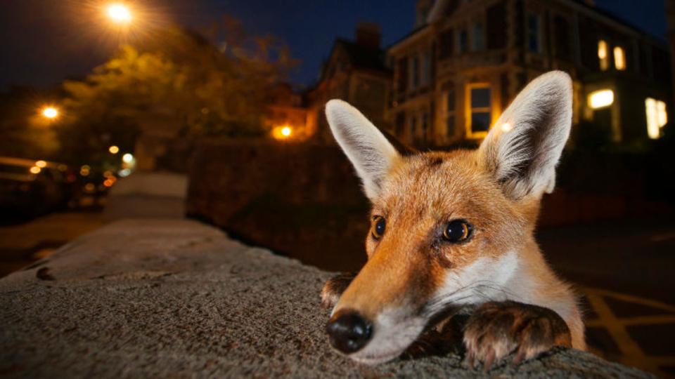 今年のベストショットはいかに? イギリスの自然野生動物フォトコンテスト優秀作品