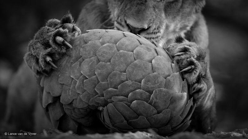 自然野生動物フォトコンテスト 6