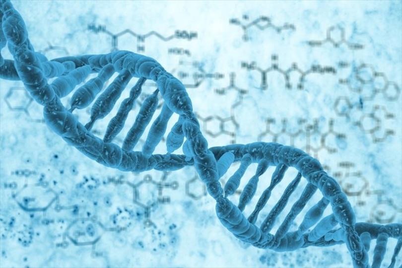 ジャンクDNAはガラクタじゃない! どうやら背骨に関係が…