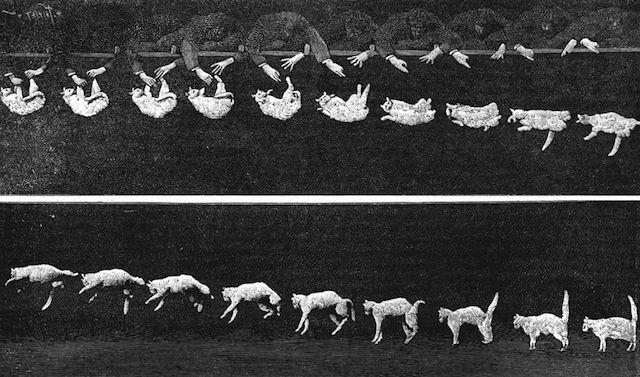 160915Falling_cat_1894.jpg