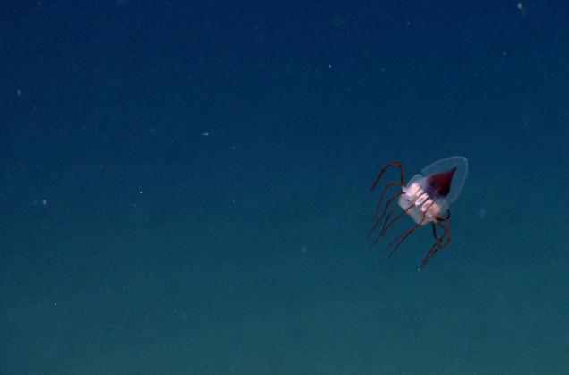 ナショナル・モニュメントの海洋生物 5