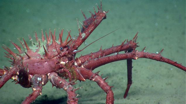 ナショナル・モニュメントの海洋生物 6