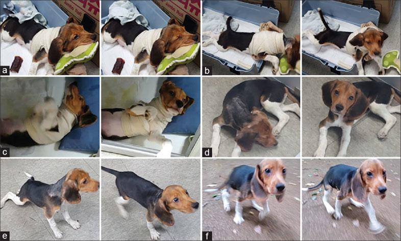 頭部移植手術 動物実験