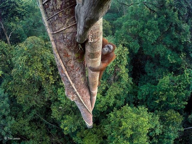 1 野生動物フォトコンテストの素晴らしい受賞作品