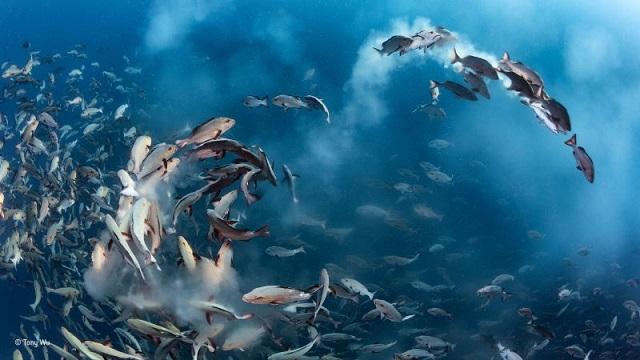 7 野生動物フォトコンテストの素晴らしい受賞作品