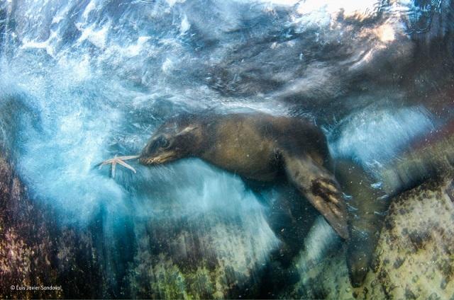 9 野生動物フォトコンテストの素晴らしい受賞作品