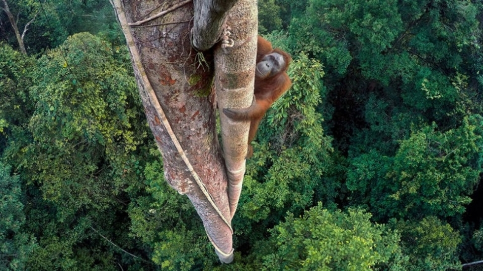 野生動物フォトコンテストの素晴らしい受賞作品