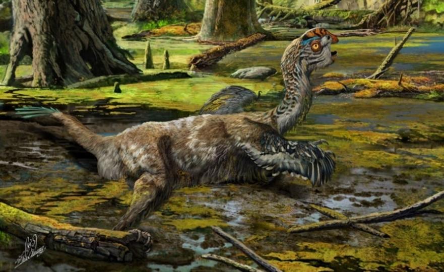 新発見された羽毛恐竜、泥にとらわれたかわいそうな姿のまま化石に…?