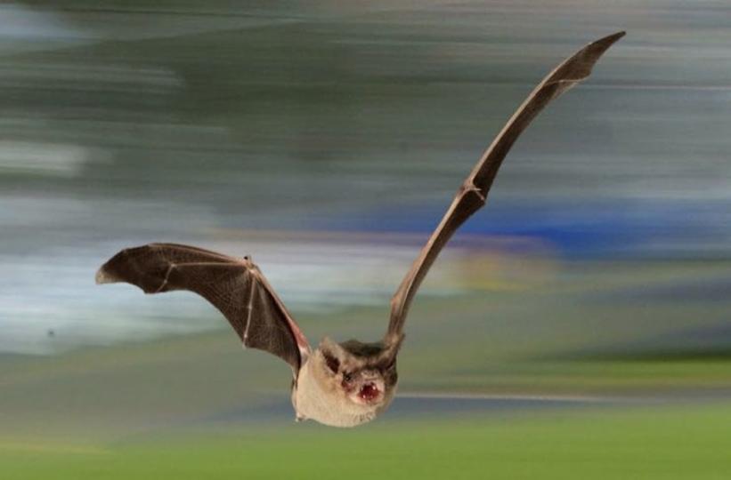 動物界の水平飛行最速が更新される。 栄冠に輝いたのは夜の王者…!