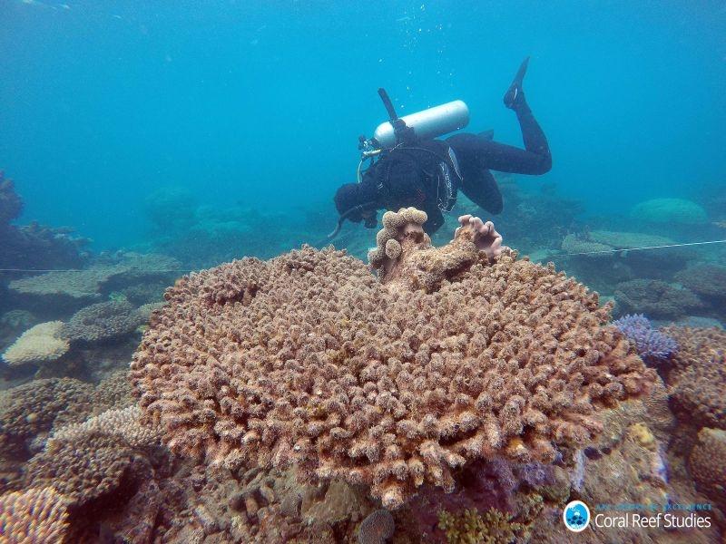 白化現象で死滅したサンゴ礁