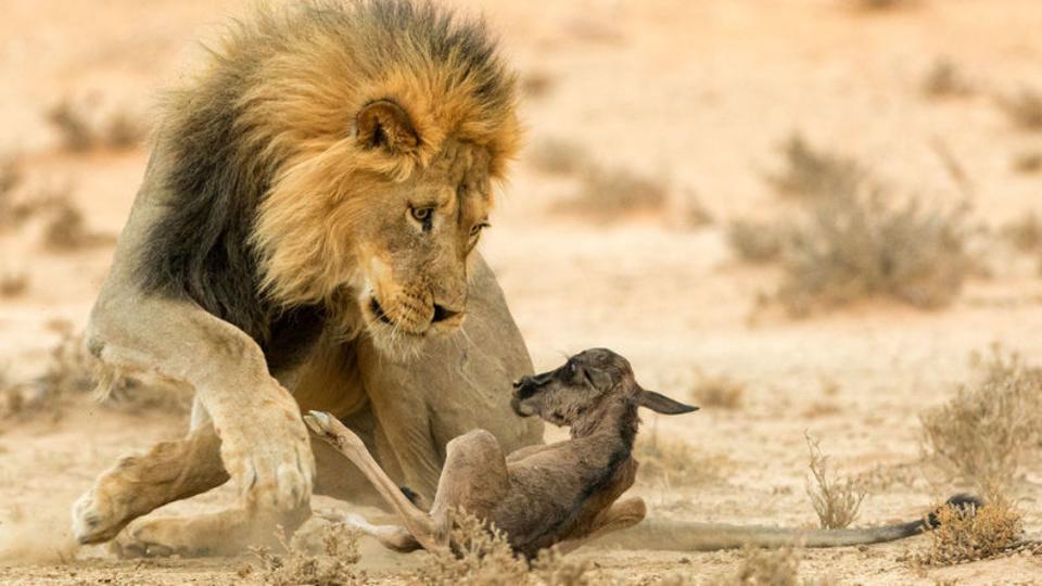 野生動物のフォトコンテストが見せる自然の残酷さと優しさ