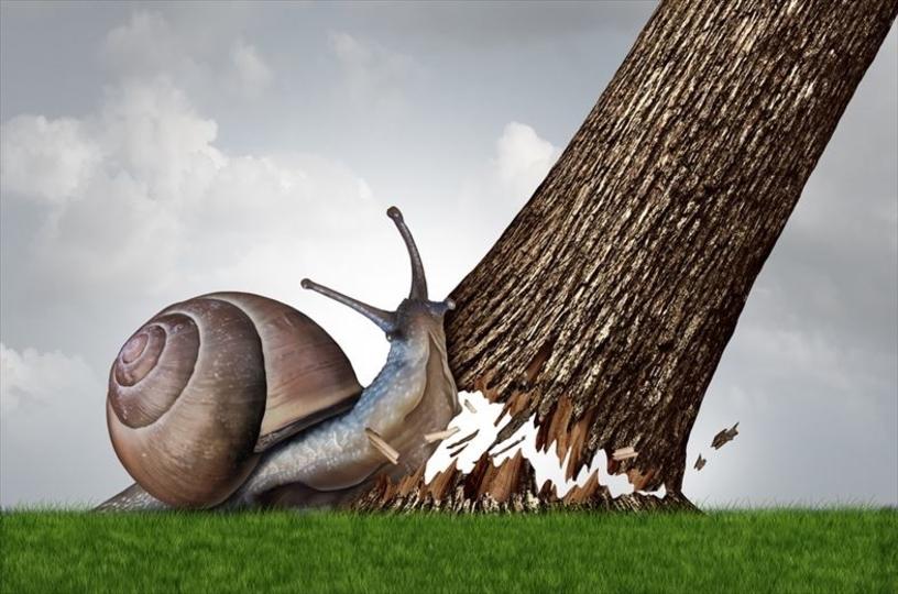 殻をふりまわして敵を倒すカタツムリ、発見される