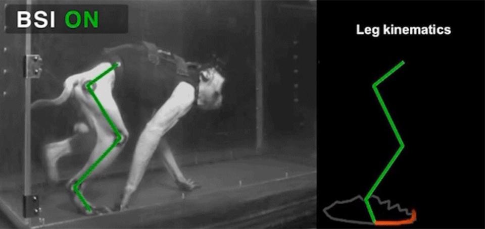脳の命令をワイヤレスで脚に送るデバイスによって、下半身不随のサルが再び歩行可能に!