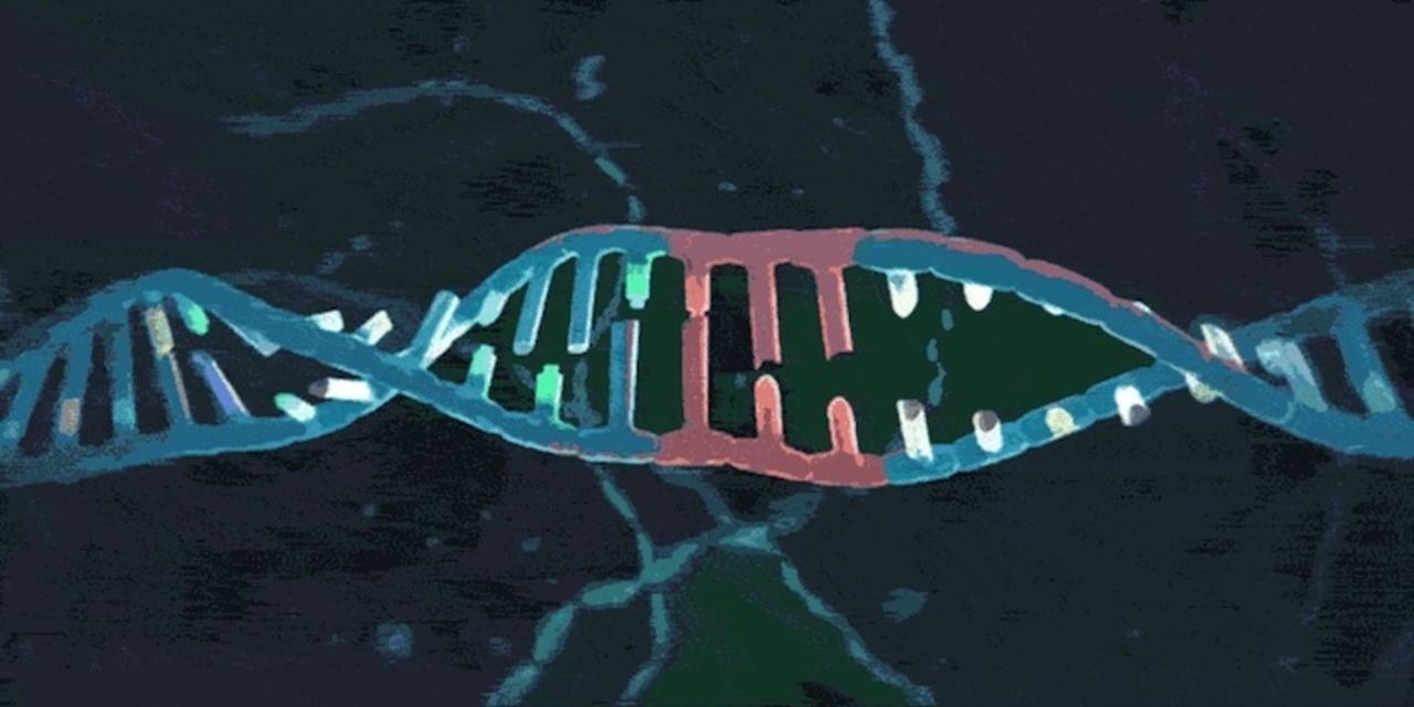 魔法の遺伝子編集技術「CRISPR」、特許をめぐり法廷バトル中