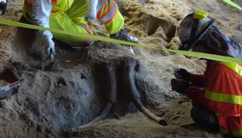 リアル・ポケストップだぜ。LAの地下鉄工事現場でマストドンの化石発見か