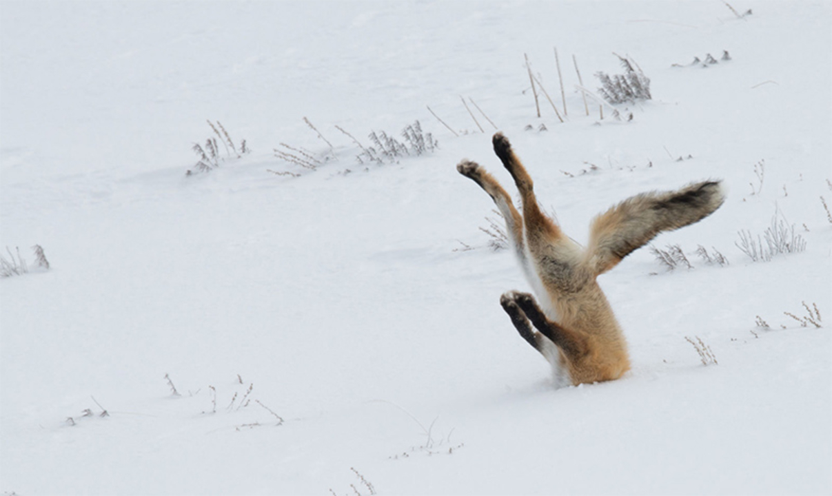 思わず笑っちゃう野生動物コメディー写真アワード、今年の受賞作は?