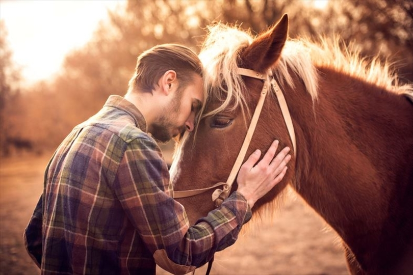 「チラッ(助けて!)」 馬は困ったことがあると人間にシグナルを送るらしい