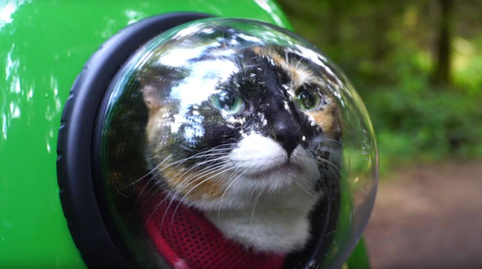 にゃんこが宇宙飛行士のように見える猫用キャリーバッグ「U-Pet」