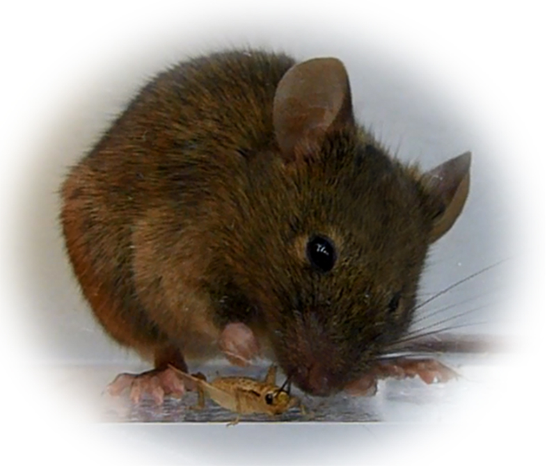 170117_mousezombie03.jpg