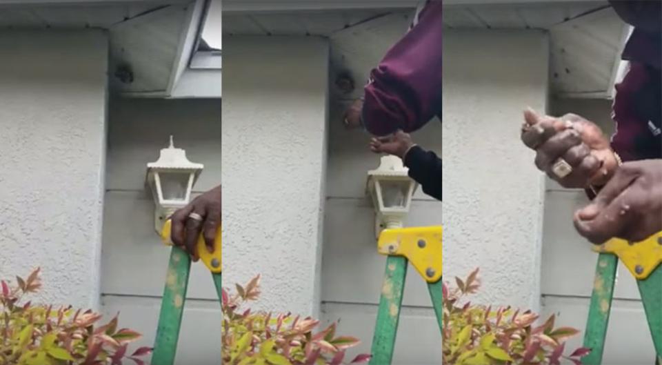 絶対マネできないハチの巣駆除方法、素手で巣を握りつぶす