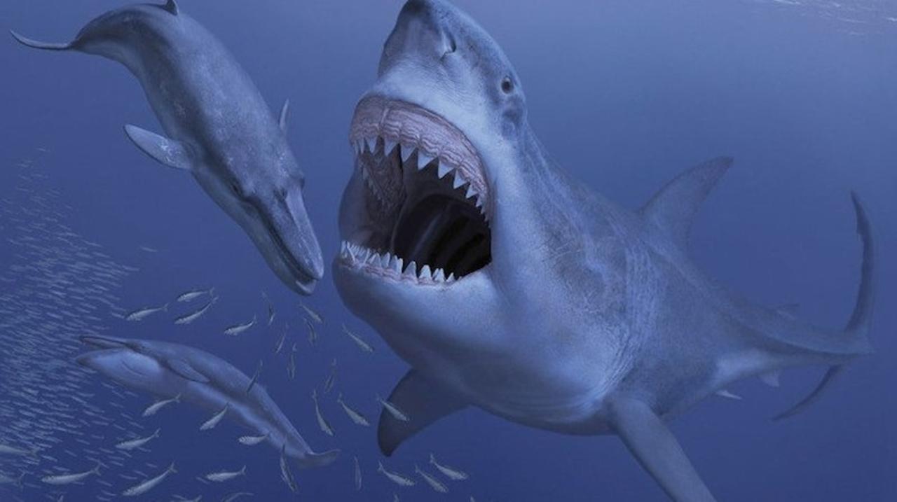 体長16mの巨大サメ・メガロドン、好き嫌いが激しすぎて絶滅した?