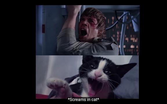 ネコが『スター・ウォーズ』などの名作映画のシーンを演じた結果